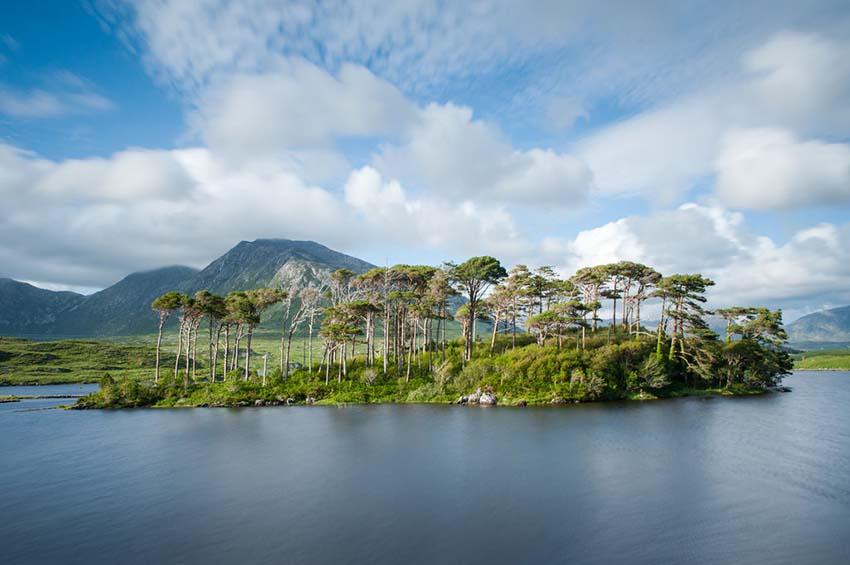 Pine Island, Camping Vans Ireland