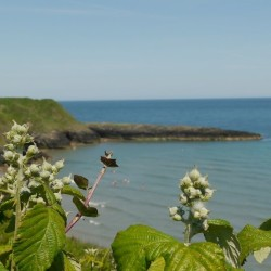 Overlooking Silver Strand Beach WIcklow