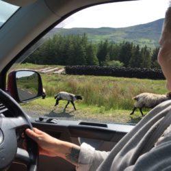 Road Trip in Ireland