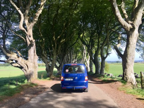 Spike Visits Dark Hedges Game of Thrones